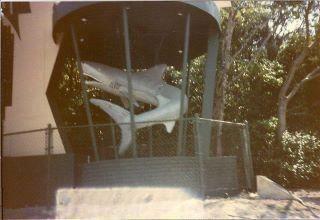 Revolving Shark